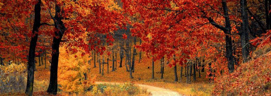autunno e medicina tradizionale cinese