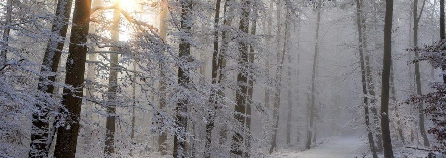 Inverno e Medicina Tradizionale Cinese